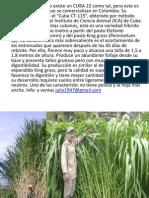 Cuba 22 y Mar Alfalfa