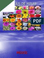 Indicações Florais
