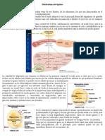 Metabolismo de Lipidos 1