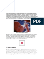 to Fetal- 2 Trimestre