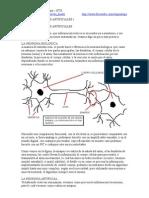 Redes Neuron Ales Artificiales 1