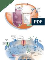 Presentación Metabolismo de Carbohidratos. Mtro.Abel Fuentes Toledo
