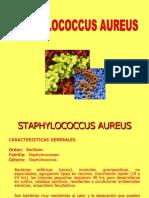 presentación STAPHYLOCOCCUS AUREUS