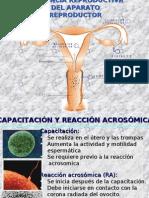 Endocrinologia y Gestacion Sin Fotos