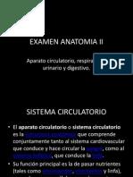 EXAMEN ANATOMIA II