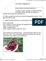Mulberries - How to Grow, Prune, Propagate Etc
