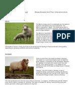 Sheep Breed Info