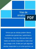 Vias_de_sinalizacao_2011