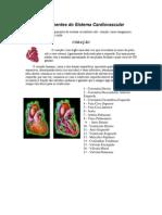 Componentes Do Sistema Cardiovascular TRABALHO de ED. FIS