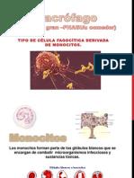 Macrófago
