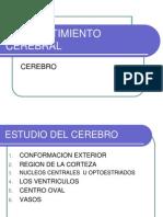 COMPARTIMIENTO CEREBRAL, CORTEZA