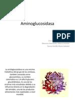 Aminoglucosidasa