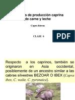 clase 6 caprinos