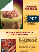 Clase10-Corteza Cerebral Funciones Intelectuales Aprendizaje