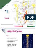 Clase13-Sistema Nervioso Autonomo