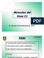torresquevedo torax1