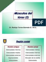 torresquevedo torax2