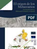 Origen de Los Metazoarios