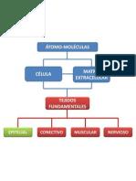 EpitelioGlandular1
