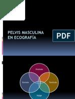 Anatomía Ecográfica de la Pelvis Masculina