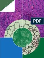stem cell isscr