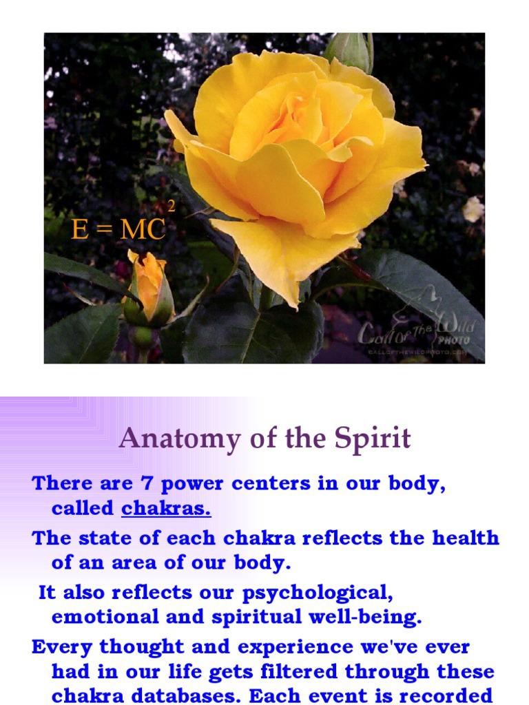 Anatomy of the spirit chakra mind fandeluxe Images