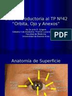 Clase Introductoria Al TP42 Orbita, Ojo y Anexos