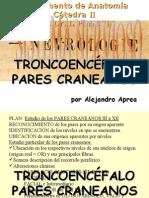 Clase Introductoria Al TP37 Pares Craneales