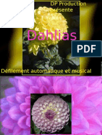 DP - Dahlias