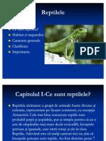 Reptile Leh