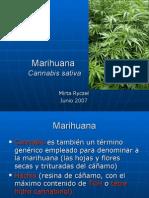 Marihuana - Cannabis