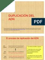 22-Duplicacion Del Adn