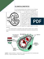 09-10 Glomerulonefritis (Sigue)(CORREGIDA DEFINITIVA