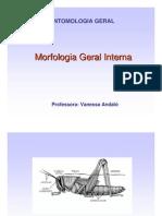Aula_Morfologia_interna