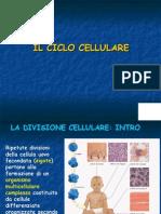 Biologia Applicata - Ciclo Cellulare