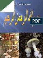 Anti Fungal Drugs[1]