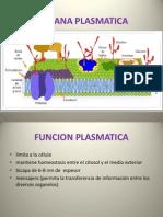 Membrana Plasma Tic A Pzra Equipo