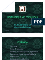 Bacteriologia de camarones