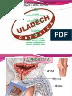prostata y vejiga 4