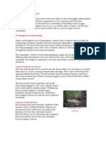 What is a Mangrove