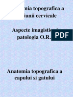 Anatomie ORL IRM