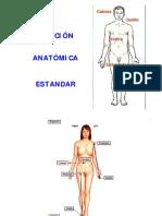 Bases Topograficas Del Cuerpo Humano