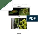 Formas vegetativas y morfología floral en Orquídeas como método de identificación