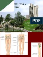 4ta Clase Miembro Inferior - Region Poplitea y Pierna - Dr Marcos de La Cruz