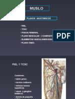 2da Clase Miembro Inferior - Muslo - Dr Santos Correa