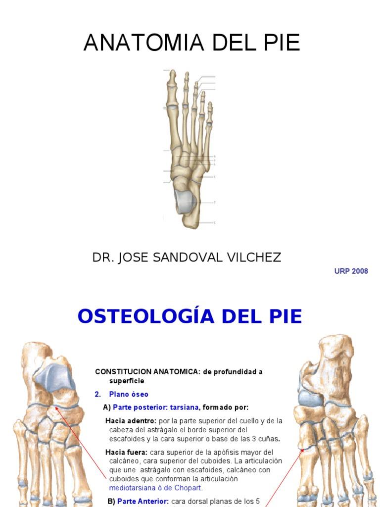 5ta Clase Miembro Inferior - Pie - Dr Sandoval