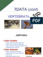 Chordata (Cont), Legislation , Effort