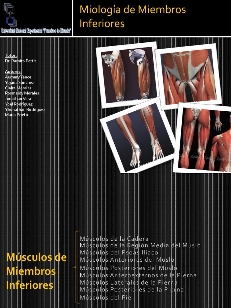 Musculos de Miembros Inferiores