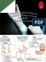 FisiologíaSecretoradelEstómago