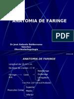 Faringe y Laringe